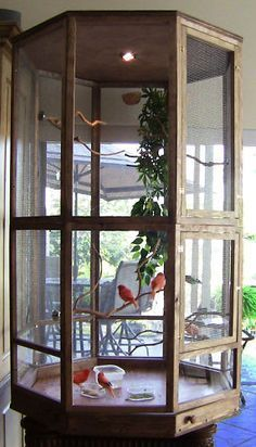 ♥ Pet Bird Cage Ideas ♥ Would love to have a cage like this out on my new patio. #parrotcagediy