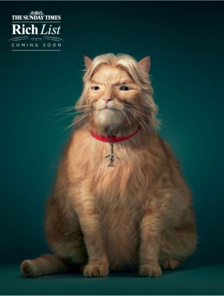 Read more: https://www.luerzersarchive.com/en/print-ad-of-the-week/2014-22.html The Sunday Times Who are the 'fat cats' of 2014? A Branson-esque print ad for the Rich List, published annually in The Sunday Times magazine. Tags: Tim Flach Photography, London,Grey, London,Jo Sissons,Miguel Angel Gonzalez,Kate Alsopp,The Sunday Times,Anthony  Crossfield,Dave Monk