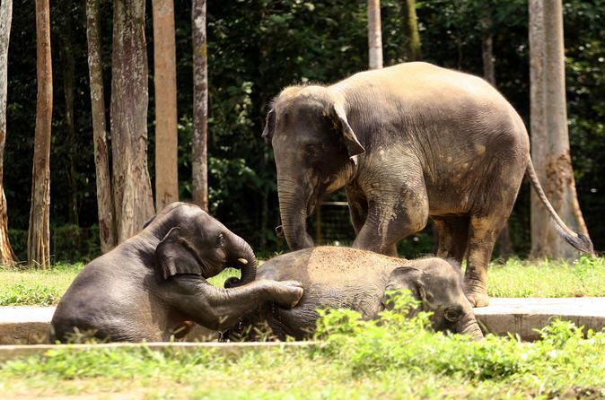 Omg i would LOVE to bathe a baby elephant!  Private Tour: Elephant Orphanage Sanctuary Day Tour from Kuala Lumpur - Lonely Planet