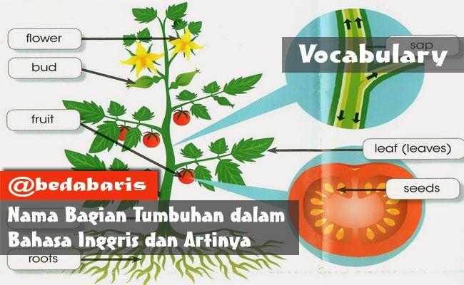 Nama Bagian Tumbuhan dalam Bahasa Inggris dan Artinya  http://www.belajardasarbahasainggris.com/2017/11/26/nama-bagian-tumbuhan-dalam-bahasa-inggris-dan-artinya/