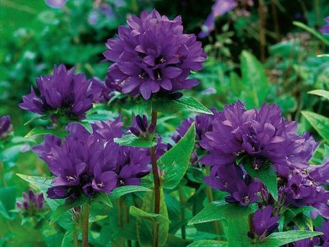 See which flowers and foliage plants work in a summer cutting garden with plant …