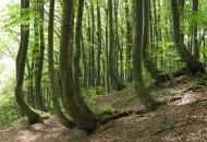 Hiking in Le Marche.  Itineraria: Valle Tre Santi e l'Abbazia di Piobbico