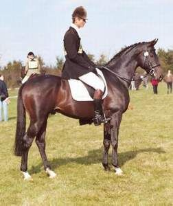 the history and the characteristics of the arabian horse The above qualities identify type in the purebred arabian horse if the horse   unparalleled beauty, a rich history and a unique ability to bond with their owners.
