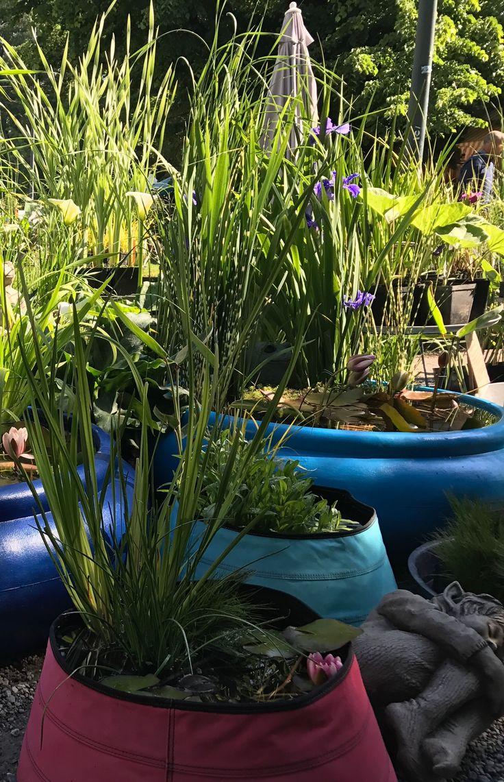 ORTICOLA Milano piante acquatiche in vasi di tela colorati