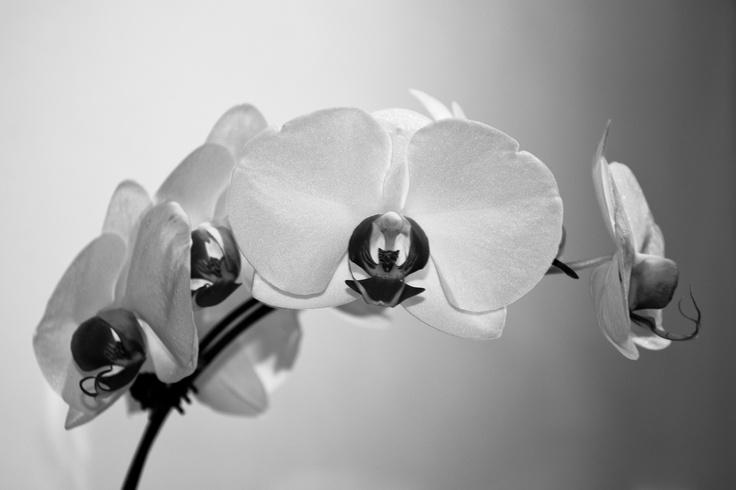 orquid