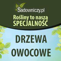 Drzewa owocowe to nasza specjalność sprawdź ofertę - #drzewa #owocowe #owoce #ogród Sklep Internetowy Wysyłka gratis od 99zł http://www.sadowniczy.pl/pol_n_DRZEWKA-OWOCOWE-3347.html?utm_source=pucek&utm_medium=pin