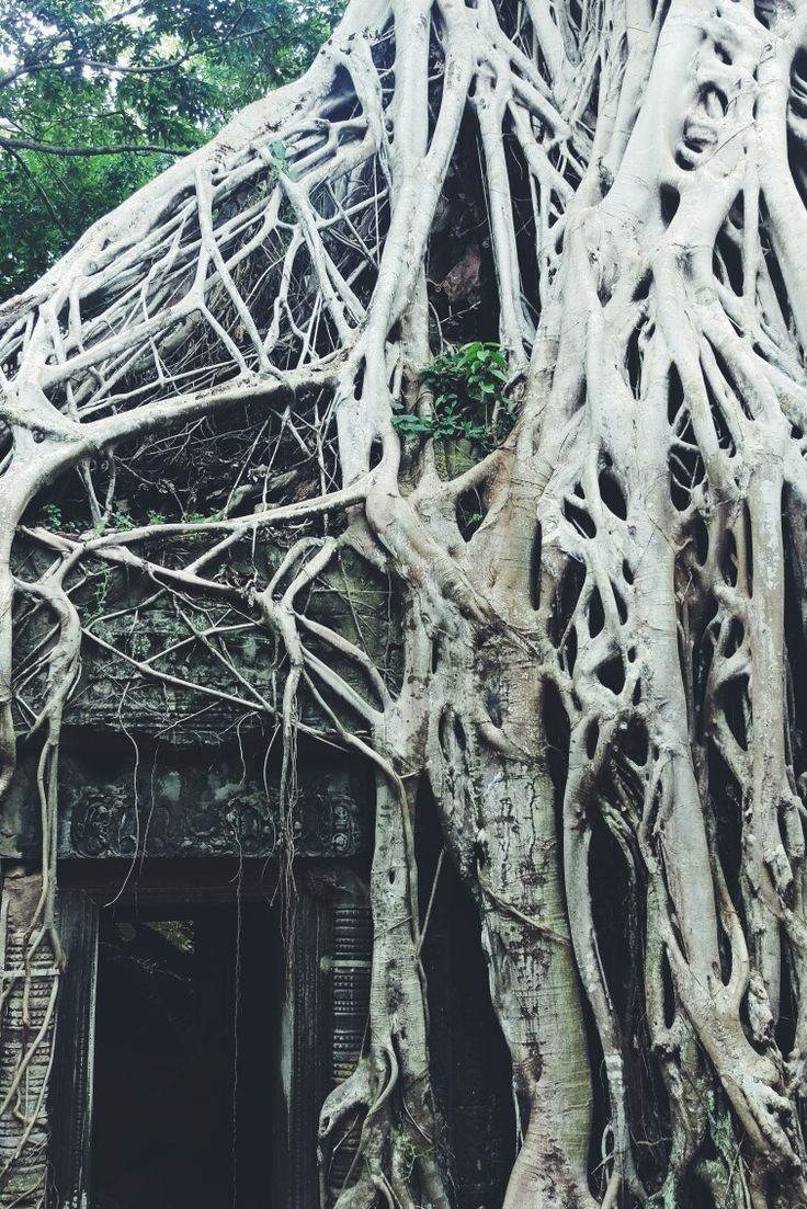 #cambodia #pattern #temple #travel #tree #old #beautiful