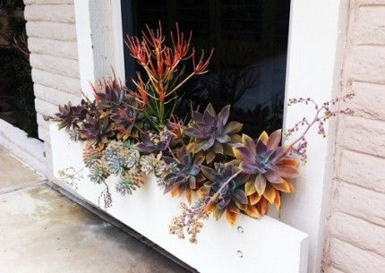 Google Image Result for http://lifeonthebalcony.com/wp-content/uploads/2011/06/20110618-110340-430x305.jpg: Succulents Container, Gardens Inspiration, Gothic Gardens, Succulent Gardens, Succulent Plants, Succulent Containers, Baldwin Gardens, Window Boxes