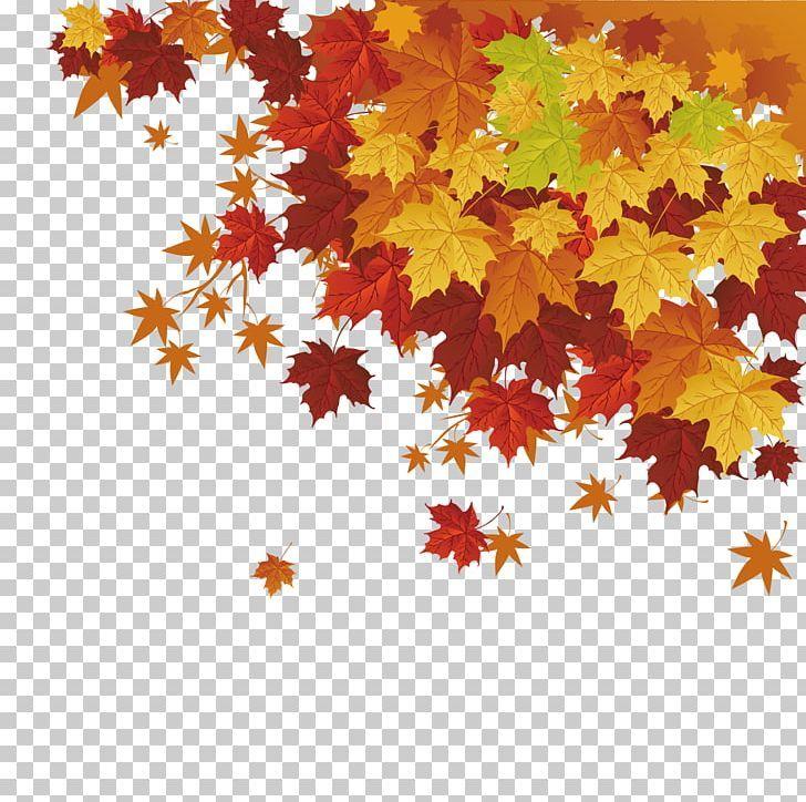 Autumn Leaf Color Maple Leaf Png Autumn Autumn Leaf Cartoon Cdr Download Autumn Leaf Color Cartoon Leaf Autumn Leaves