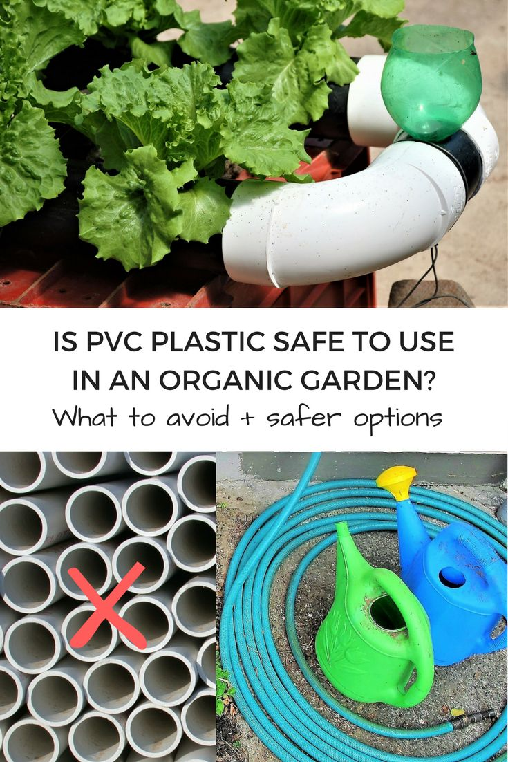Are you concerned about your health, avoiding chemicals and eating safe food? Wondering whether PVC plastic is safe to use in your garden? This article shares what the scientific research says. If you are using a garden hose, plastic pipes, aquaponics, hydroponics or garden gloves, you may want to find out how PVC leaches chemicals into soil and plants and the impact on your health. Discover what to avoid + safer options for your garden. | The Micro Gardener