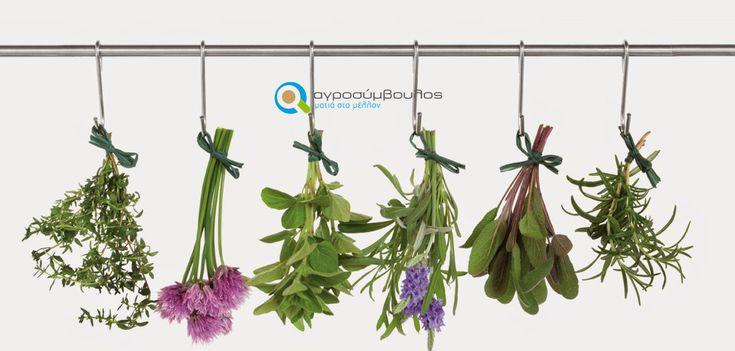 Επένδυση σε Νέες Καλλιέργειες: Τι πρέπει να προσέξετε;