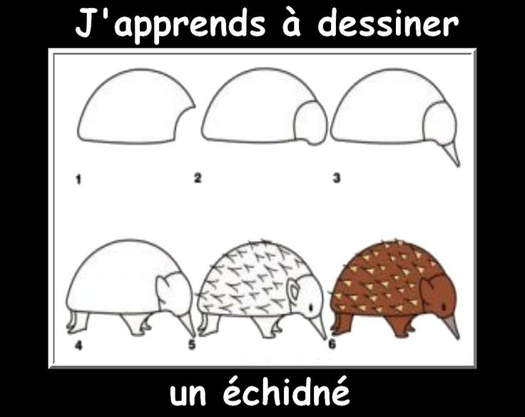 175 best images about animals on pinterest how to draw - Apprendre a dessiner un bison ...