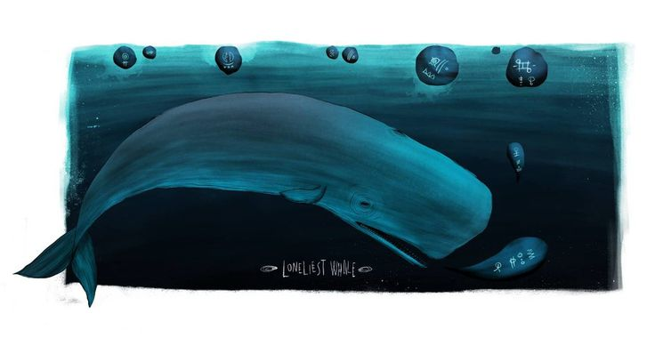 52 hertz whale by kaanbagci on DeviantArt. The only whale on earth to sing at 52 hz.  No other whale can hear him