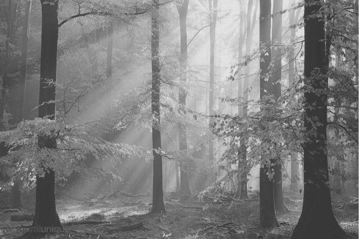 Sinfonia Della Foresta (Black and White)    Buy Prepasted Wallpaper Murals Online - Muralunique.com