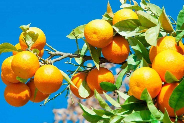 Insalata di arance – siciliansk apelsinsallad