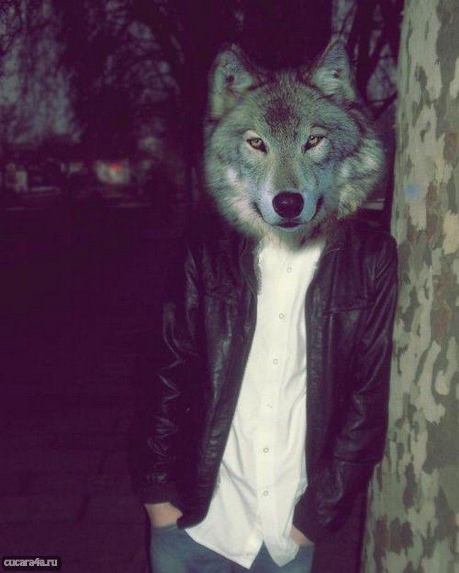 картинки людей с головой волка на аву картинки