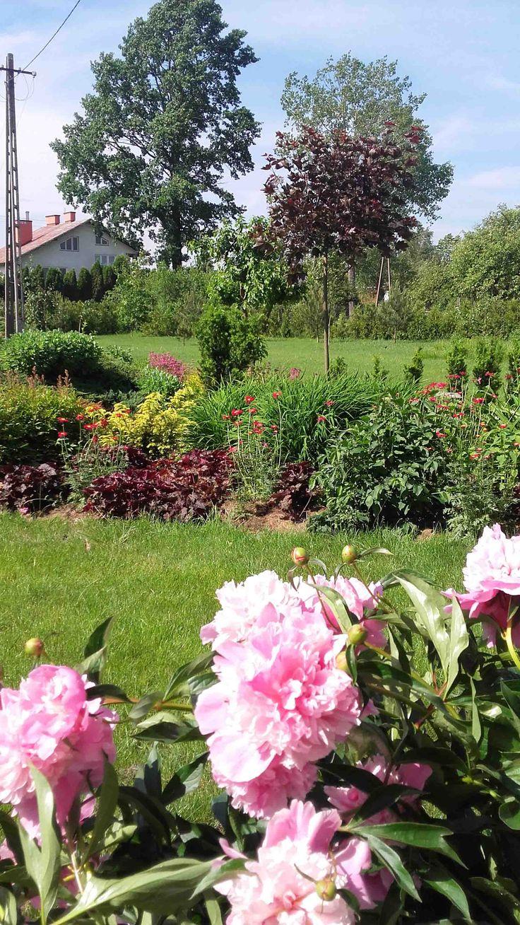 Sielski wiejski ogród. Cottage garden.