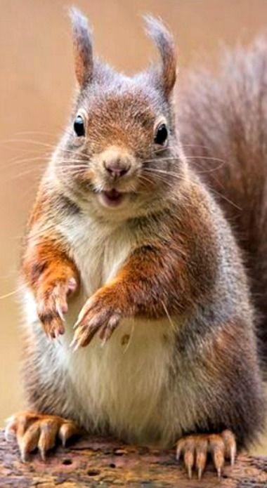 squirrel mature singles Shop on amazoncom for everyday household supplies - cleaning supplies, laundry, dishwashing, bath tissues, paper towels, trash bags.