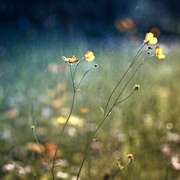: spring is in the air: von AlexAndra Schmidt » seen.by Fotokunst