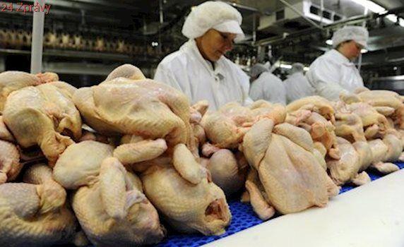 Pozor na kuřecí maso: Veterináři objevili v dovozu z Brazílie salmonelu