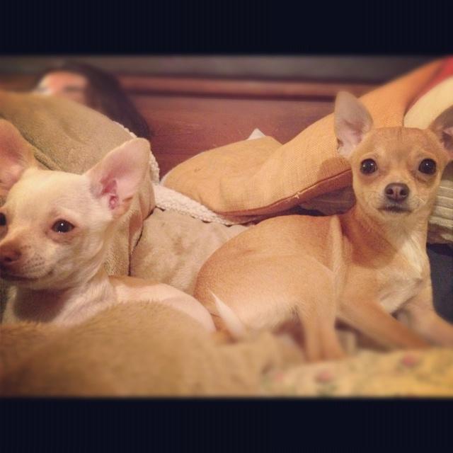 Fredd & Chloe