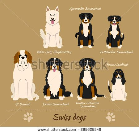 Illustration of seven different breeds of dogs: White Swiss Shepherd Dog, Appenzeller Sennenhund, Entlebucher Sennenhund, Berner Laufhund, Grosser Schweizer Sennenhund, Berner Sennenhund, St Bernard