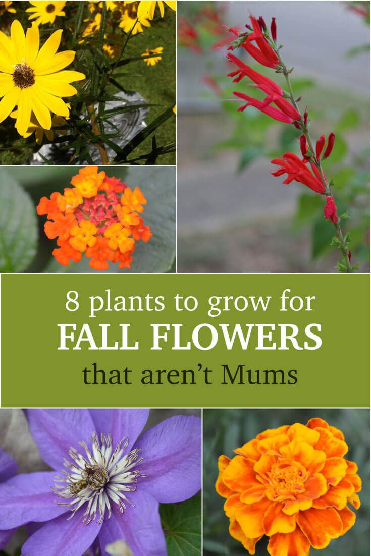 8 Plants With Amazing Color To Grow For Fall Flowers