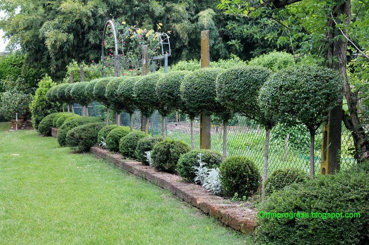 Il giardino di Casa Biasi (VR) - bossi