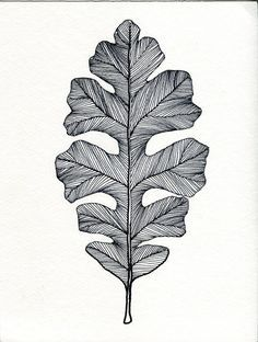 English Oak Leaf Print of original Pen and Ink by Bigbrainart, $22.00
