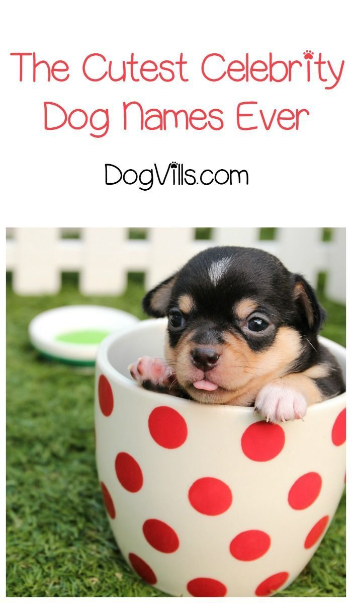6 Of The Cutest Celebrity Dog Names Dogvills Dog Names Celebrity Dogs Best Dog Names