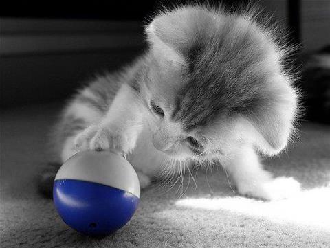 kitten playing color splash #blue