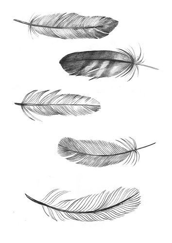 Feather tattoo -i like the one on top, in the sense of its details, though I would like some shape of it