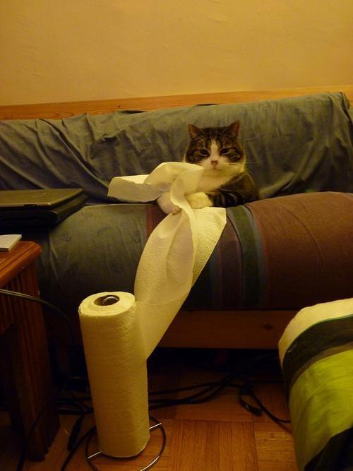 kitchen paper.