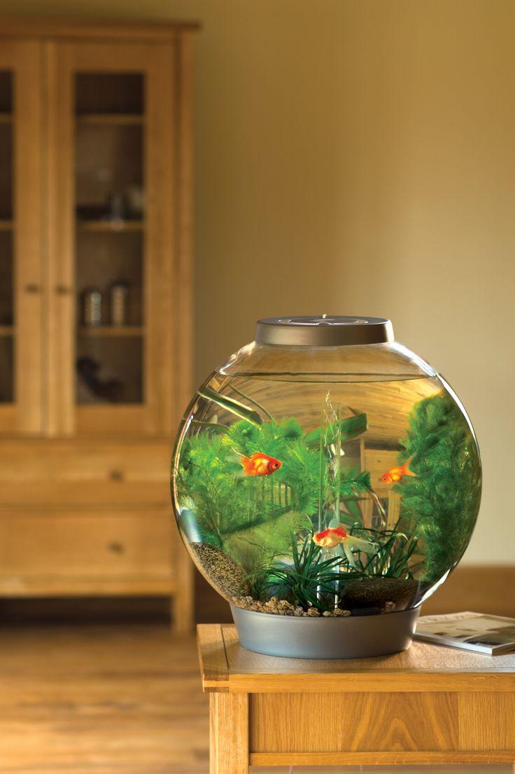 Les 15 meilleures images du tableau aquariums biorb sur for Poisson aquarium 60l
