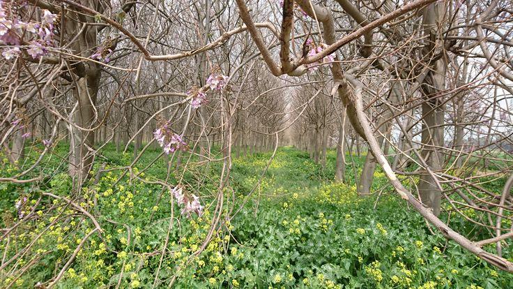 """✡ עֶרֶב ט""""וּ בִּשְׁבָט שָׂמֵחַ  Erev Chag Tu B'shevat Sameach!!! Earth, life, trees, harvest, farming, crops, fertility ♡   כִּי הָאָדָם עֵץ הַשָּׂדֶה ♥  Ki Ha'adam Etz Hasade  #TuBishvat #ChagSameach #RoshHaShanahLaIlanot #TheLandOfIsrael #HulaValley #JewishHoliday #Shevat #TuBiShvatSeder #TuBShvat #TuBeshvat"""