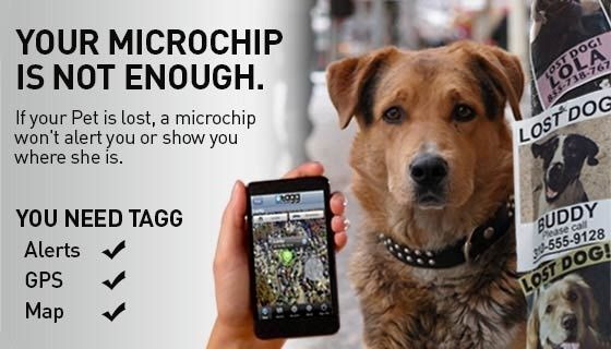Your Microchip is Not Enough - Tagg uses GPS and can track you dog