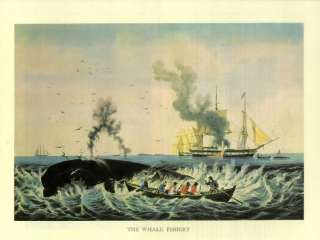 Sperm whale resources in the 1800s