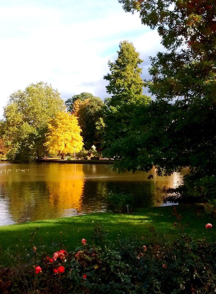 "cityhoppersgarden:  "" Rosengarten, Zweibrücken, October 2016, Rheinland-Pfalz, Germany  photography by cityhopper2  """