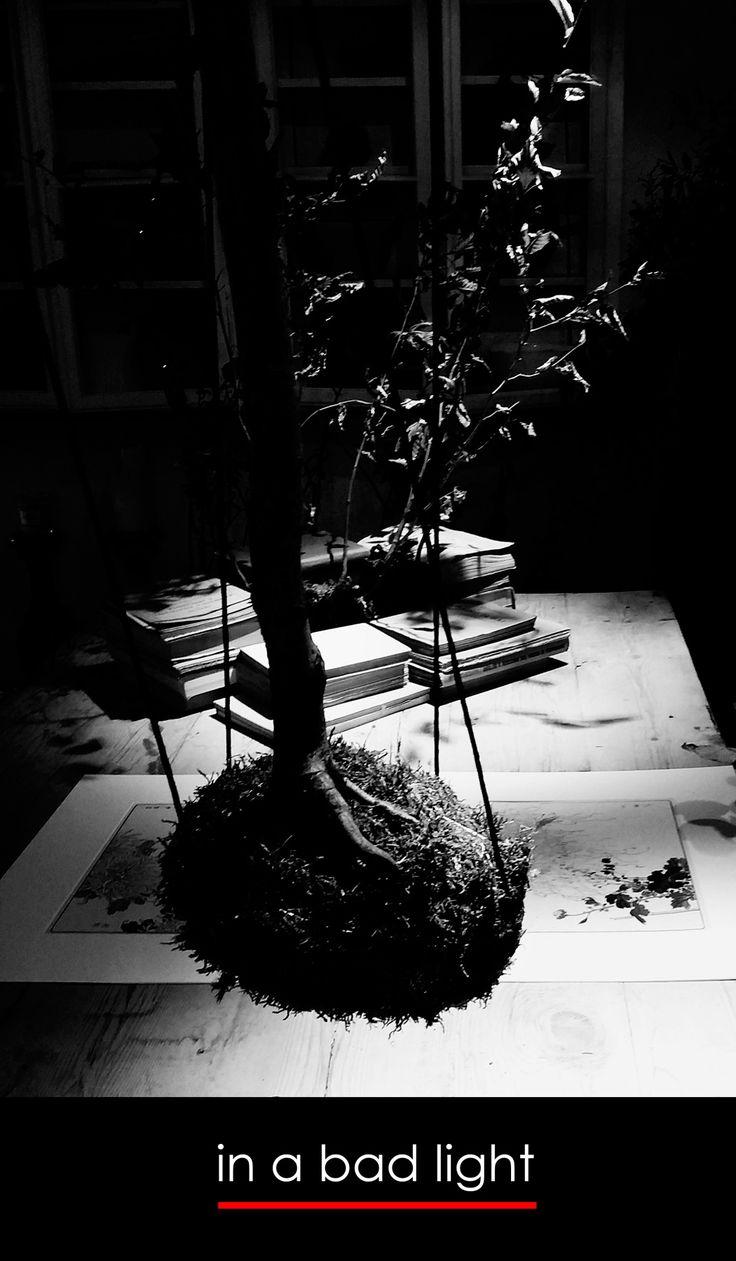 In a bad light - florist donaflor