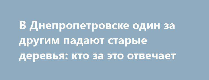 В Днепропетровске один за другим падают старые деревья: кто за это отвечает http://dneprcity.net/dnepropetrovsk/v-dnepropetrovske-odin-za-drugim-padayut-starye-derevya-kto-za-eto-otvechaet/  За последние несколько недель в городе участились случаи, когда старые деревья, которые давно пора спилить, валятся и даже портят чужое имущество. Журналист 056.ua попыталась узнать, кто за это отвечает. Мы