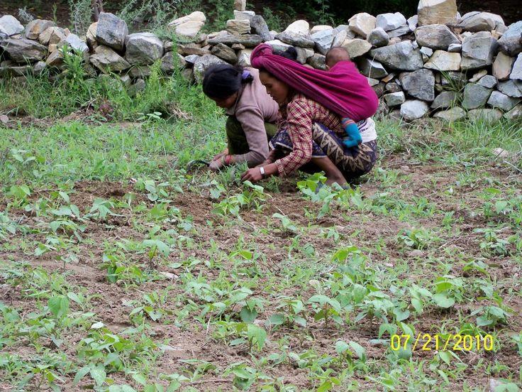 Women farmers in Nepal Himalayas  #women #Himalaya #gender #IYFF #mountain #farming #soil #children #foodsecurity @PragyaNGO