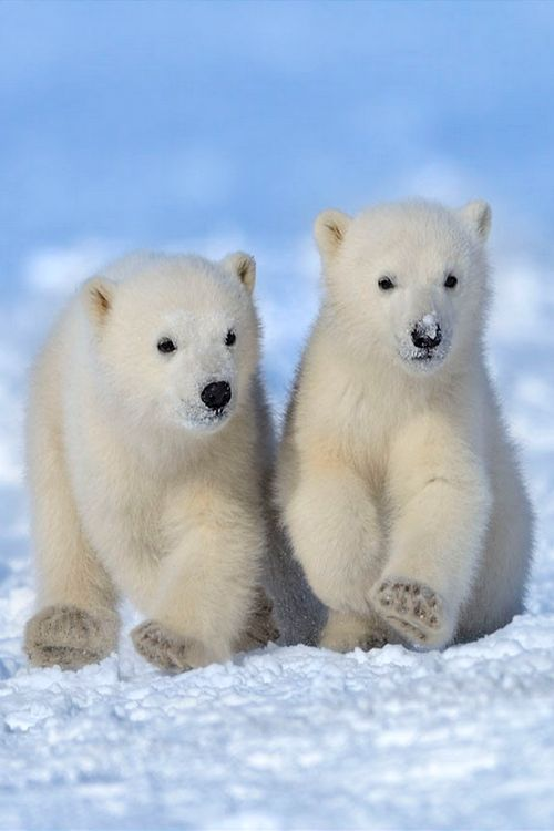 Funny Wildlife, wonderous-world: Polar Dudes by Nik Zinoviev