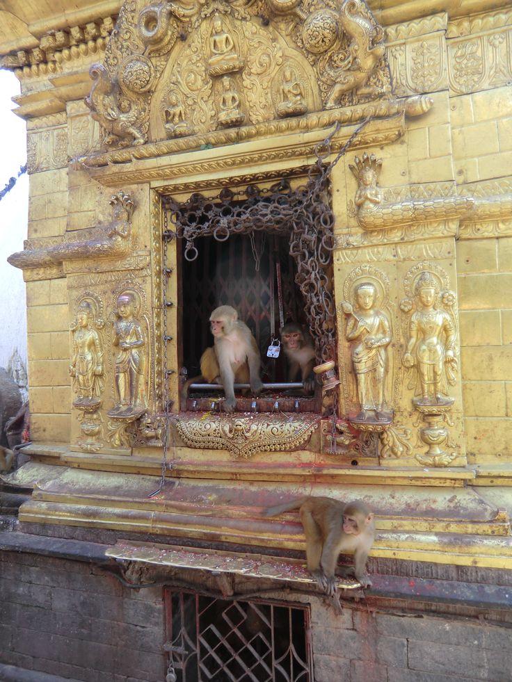 De apen bij Swayambhunath