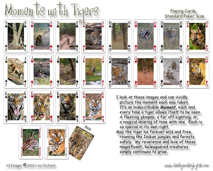 Tiger Playing Cards from www.cheekymonkeybylisa.com 54 original images of this wonderful cat.  $15ea, 2 for $25