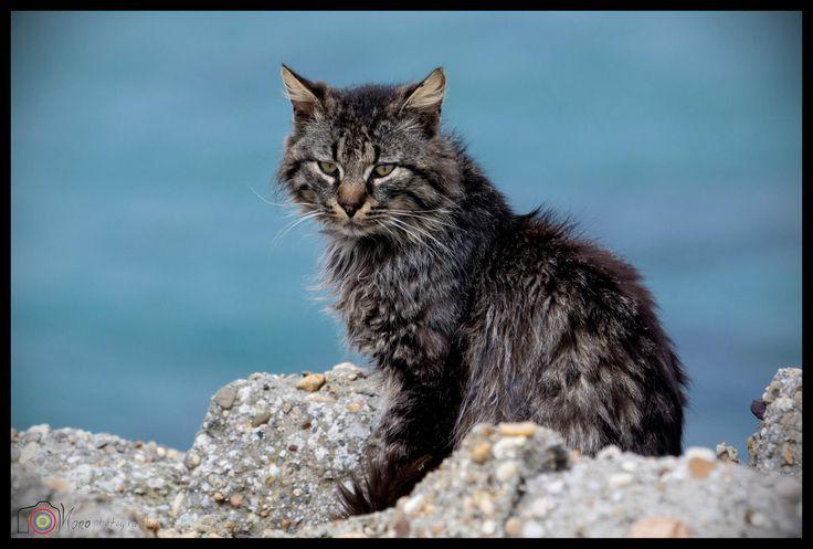 The cat ©Nono Pirvu