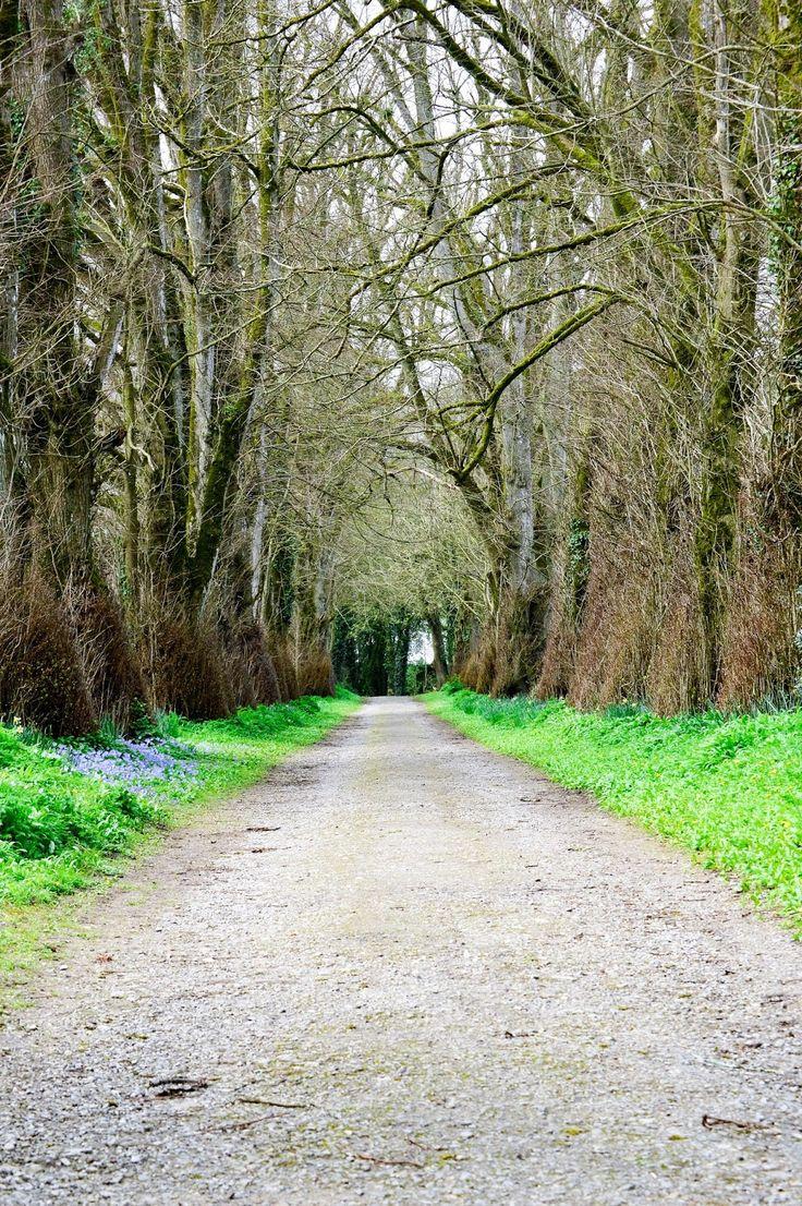 Exploring Ireland | Doneraile Park, Co. Cork ♥
