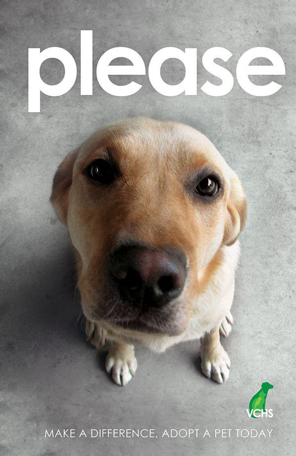 18 Best Adoption Ads Images On Pinterest Pet Adoption Animal Rescue And Animal Shelter