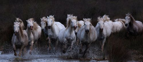 The Race is on .... by Paul Keates