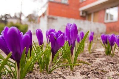 BrightNest | Annuals vs. Perennials: The Epic Gardening Decision