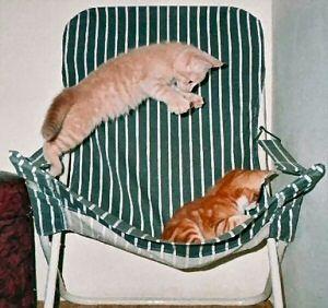 CatStuff: Funny Cat Photos,  Go To www.likegossip.com to get more Gossip News!